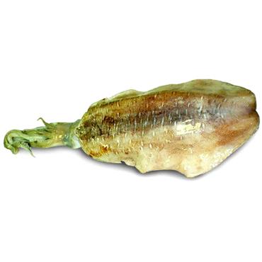 Tondi Squid